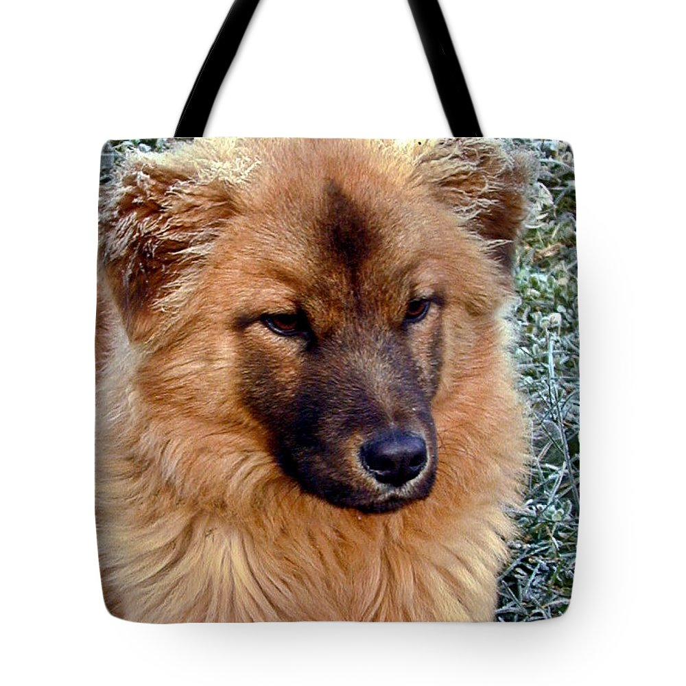 Dog Tote Bag featuring the photograph Frosty Dog by Douglas Barnett