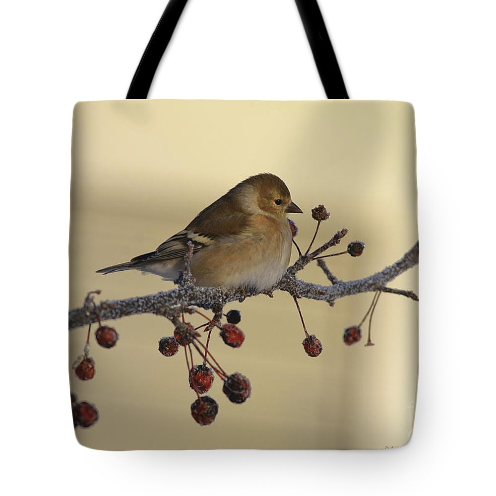 Finch Tote Bag featuring the photograph Frosty Perch by Deborah Benoit
