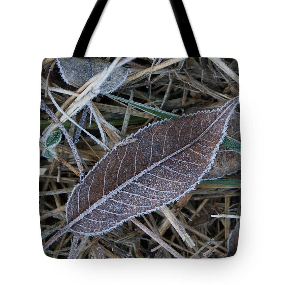 Frosty Tote Bag featuring the photograph Frosty Veined Leaf by Douglas Barnett