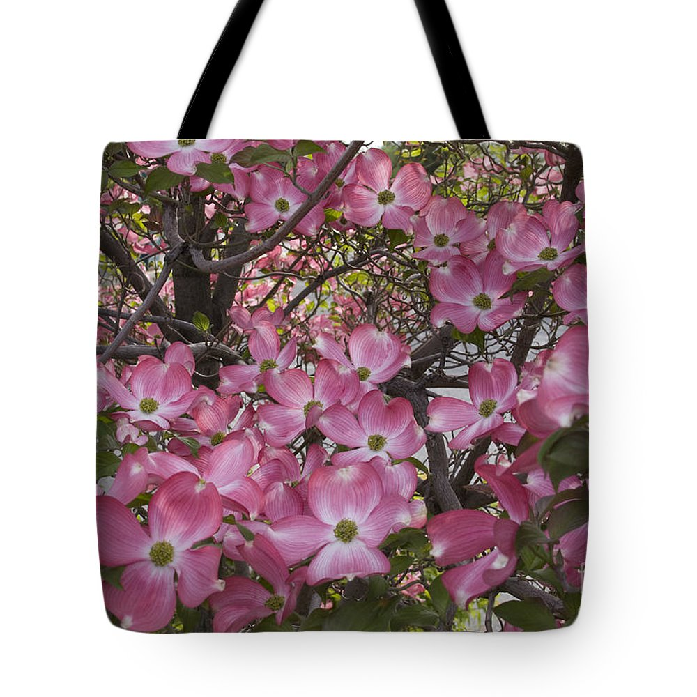 Dogwood Tote Bag featuring the photograph Full Bloom by Idaho Scenic Images Linda Lantzy
