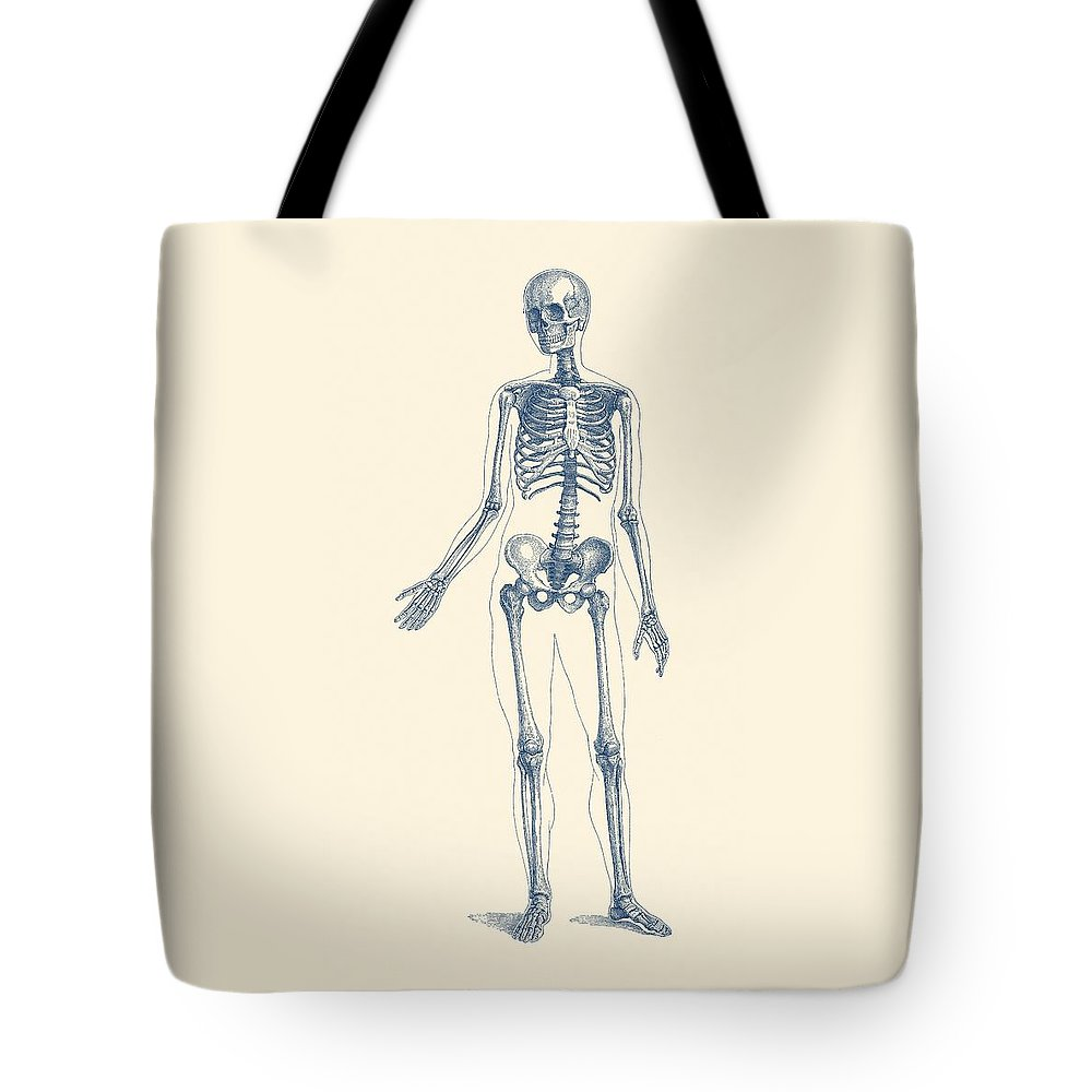 Full Body Skeleton - Vintage Anatomy Poster Tote Bag for Sale by ...