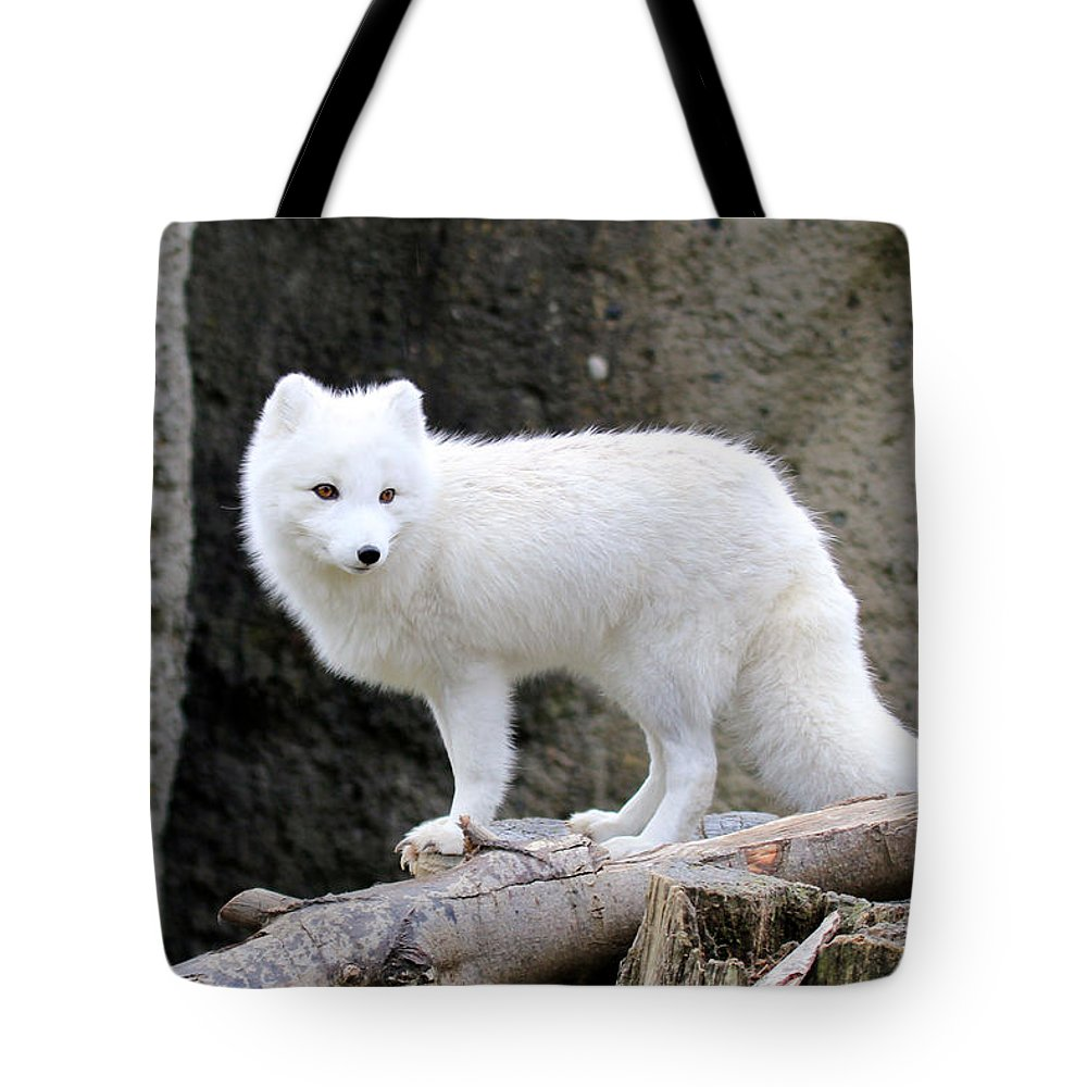 White Fox Tote Bag featuring the photograph Furry Arctic Fox by Athena Mckinzie