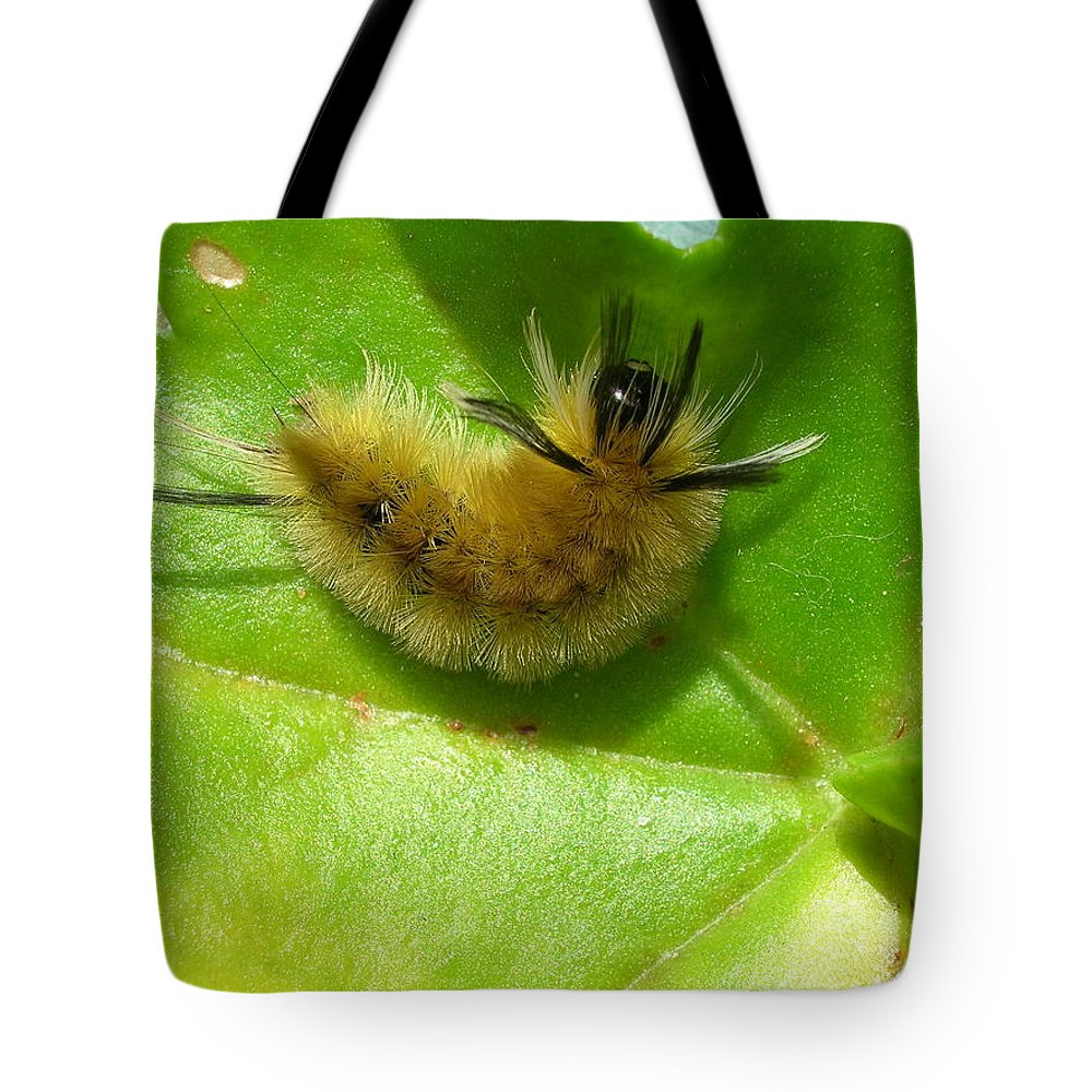 New England Photos Tote Bag featuring the photograph Furry Little Guy by Nancie DeMellia