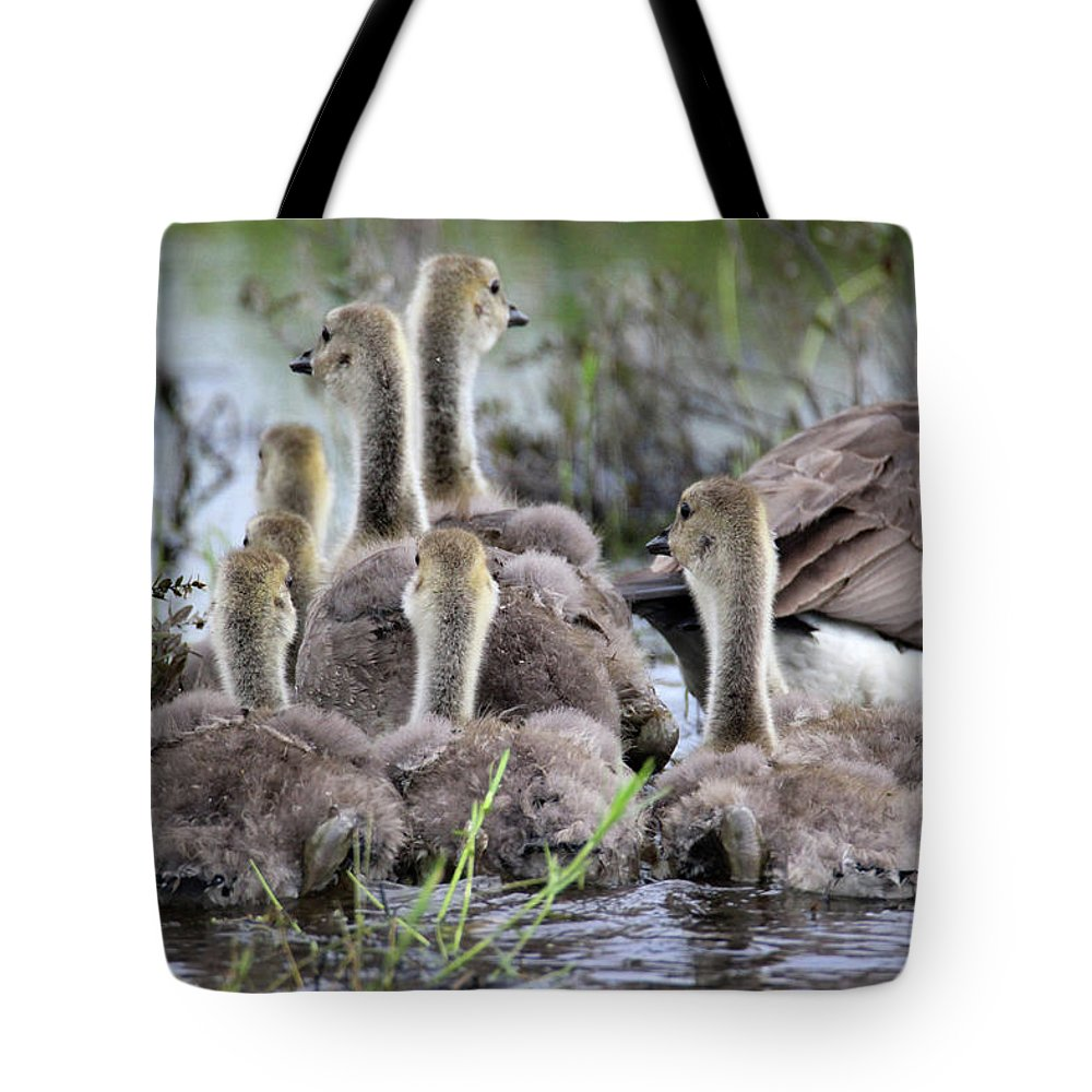 Geese Tote Bag featuring the photograph Fuzzy Butts by Brook Burling
