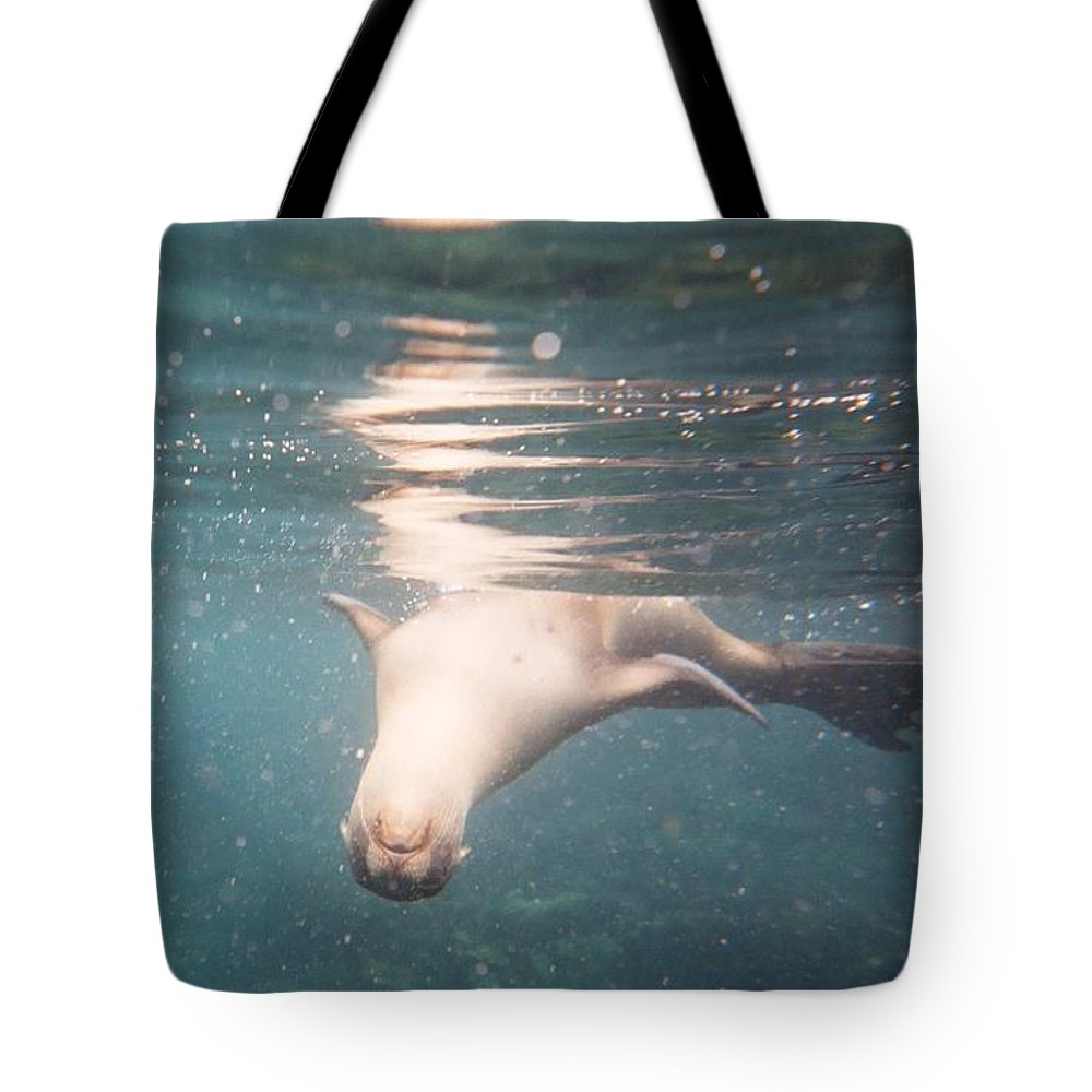 The Galapagos Islands Tote Bag featuring the photograph Galapagos Sealion by AJ Harlan