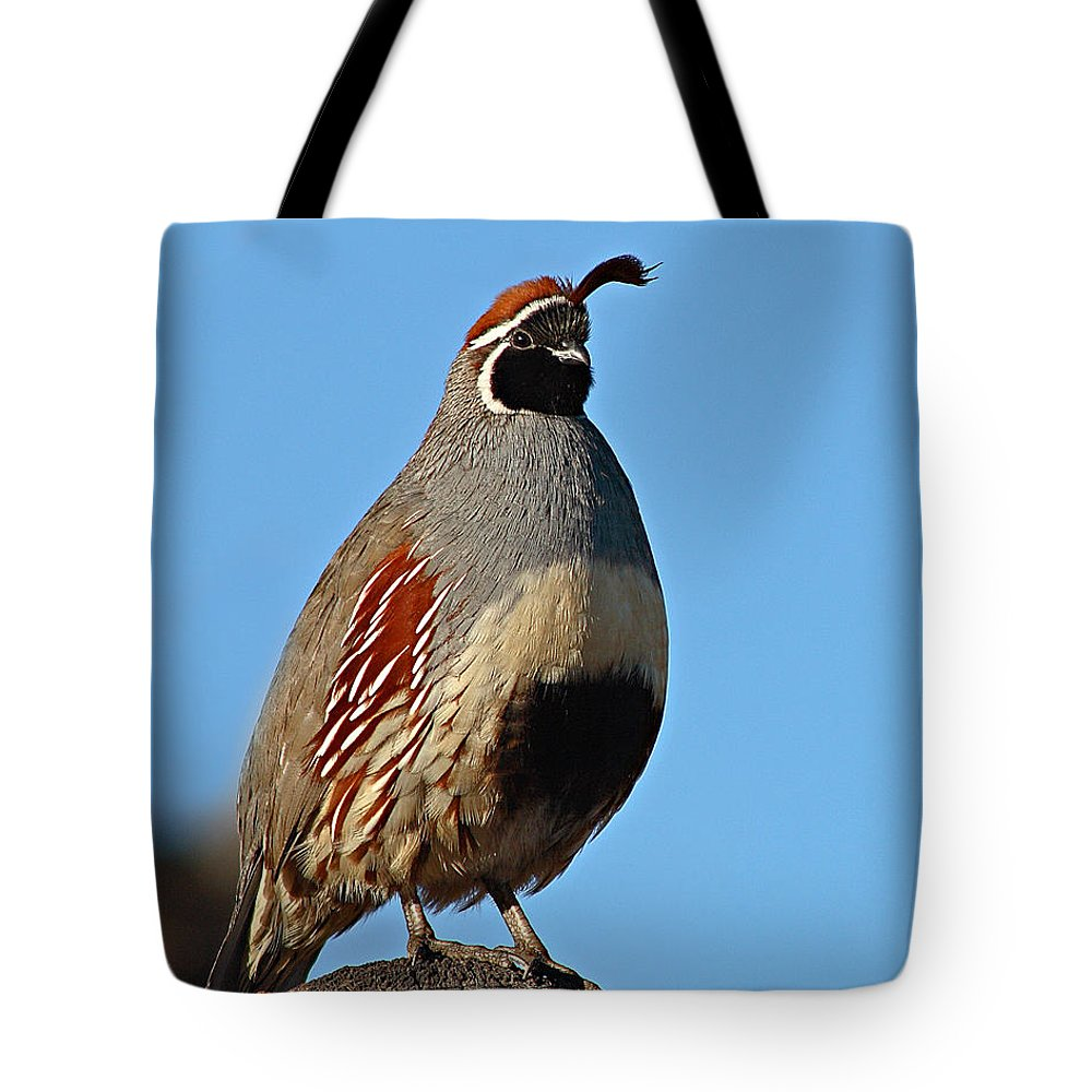 Quail Tote Bag featuring the photograph Gambel's Quail On Sunny Perch by Max Allen
