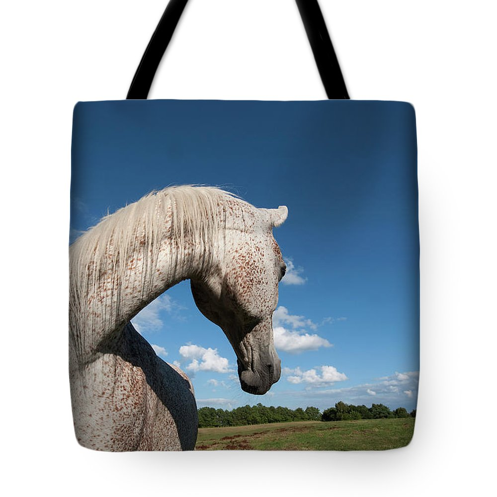 Animal Tote Bag featuring the photograph Gandawa II by Michael Mogensen