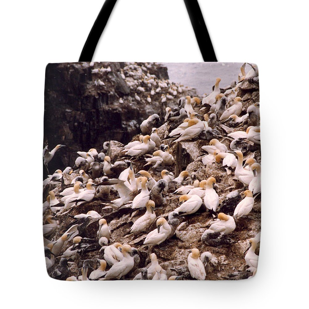 Gannet Tote Bag featuring the photograph Gannet Cliffs by Mary Mikawoz