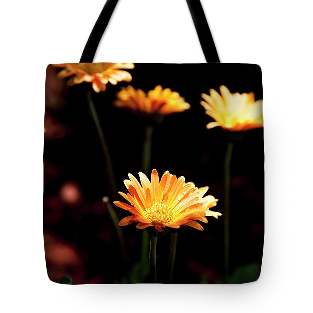 Flowers Tote Bag featuring the photograph Garden Light by Eric Christopher Jackson