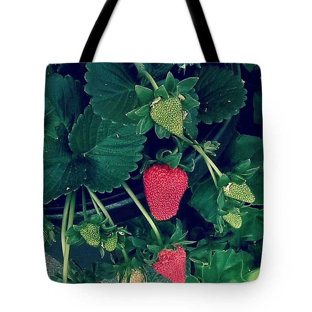 Strawberries Tote Bag featuring the photograph Ripening Garden Strawberries by Missy Brage