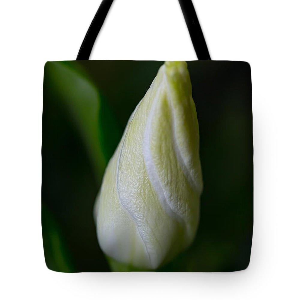 Gardenia Bud Tote Bag featuring the photograph Gardenia Bud by Dale Kincaid