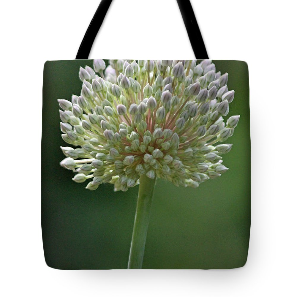 Garlic Tote Bag featuring the photograph Garlic by Suzanne Gaff