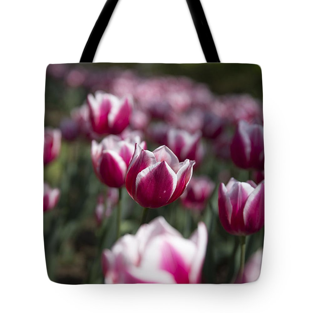 Tulip Tote Bag featuring the photograph Gathering by Jennifer Schaefer