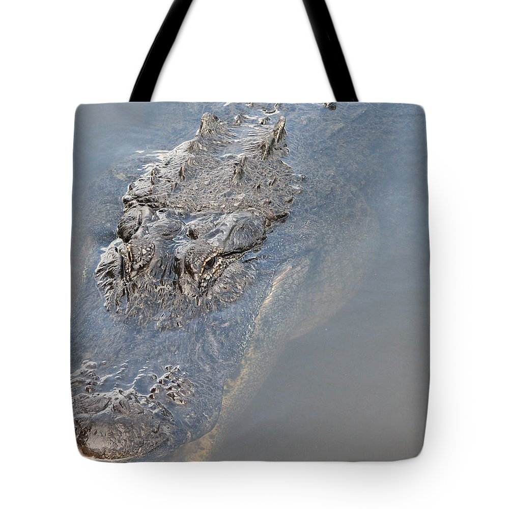 Alligator Tote Bag featuring the photograph Gator IIi by Stacey May