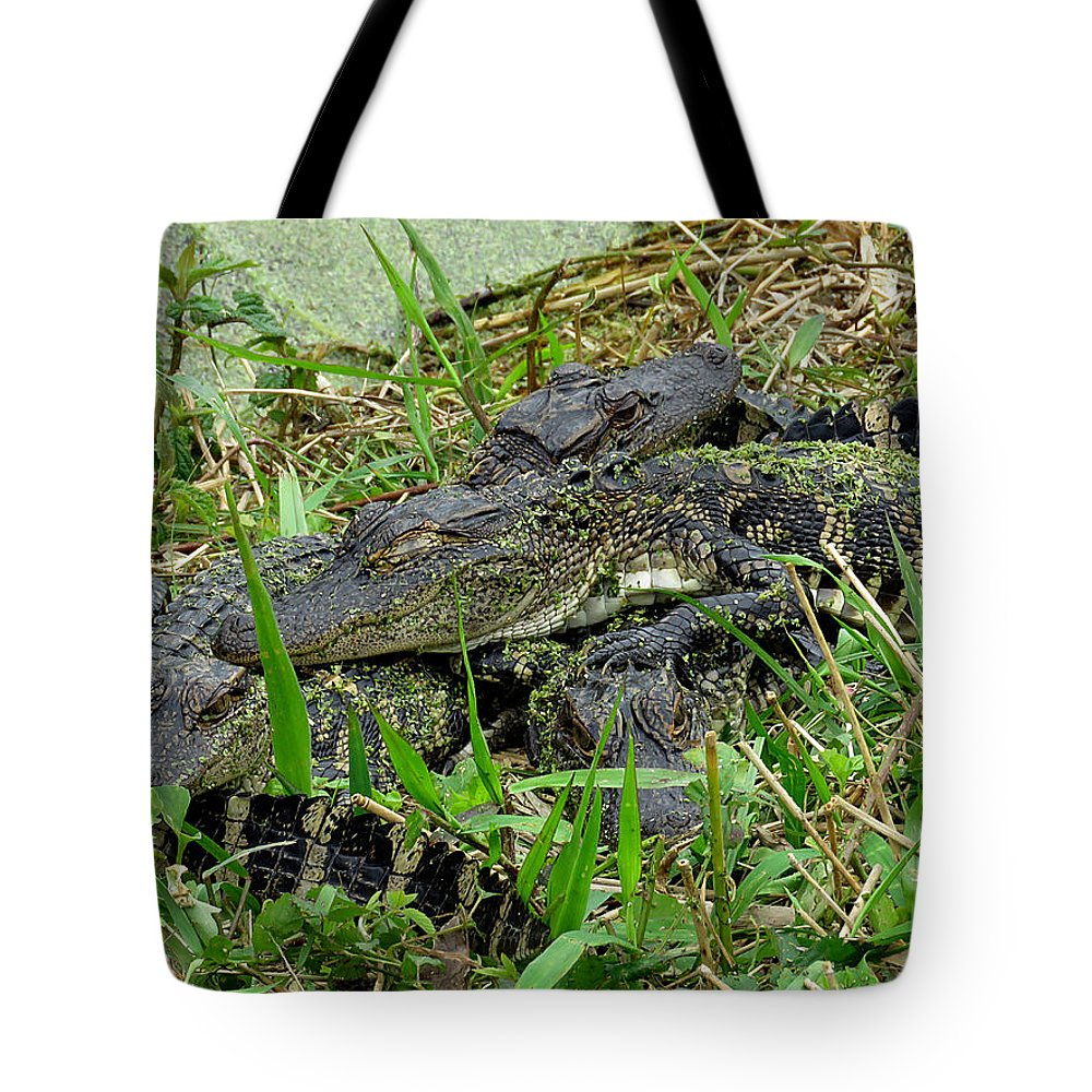 Gator Tote Bag featuring the photograph Gators 11 by J M Farris Photography