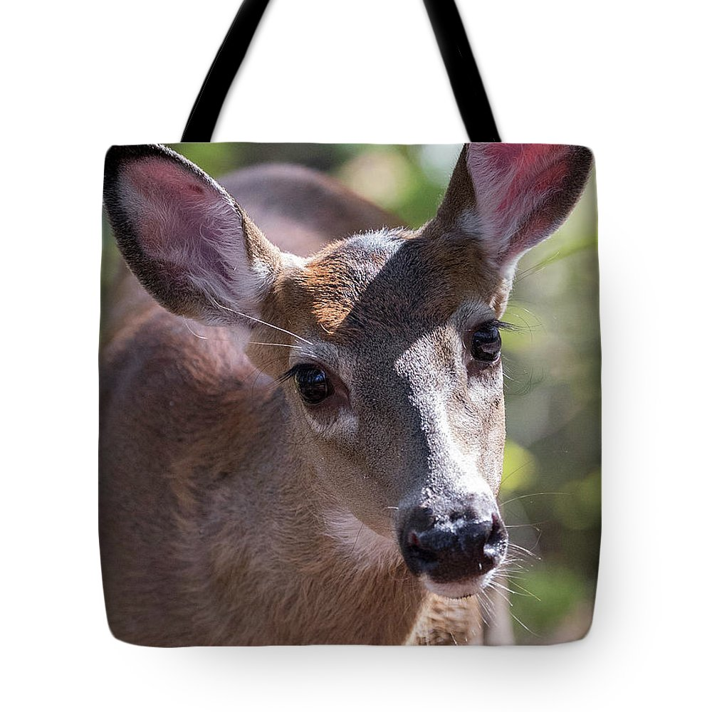 This Little Button Buck Was So Curious Of Me Tote Bag featuring the photograph Gaze Of Innocence by Everet Regal