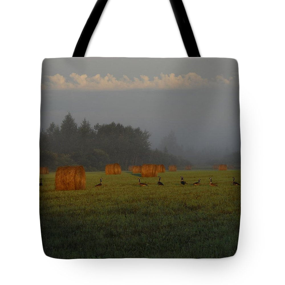 Hay Field Tote Bag featuring the photograph Geese In A Foggy Hay Field by Kent Lorentzen
