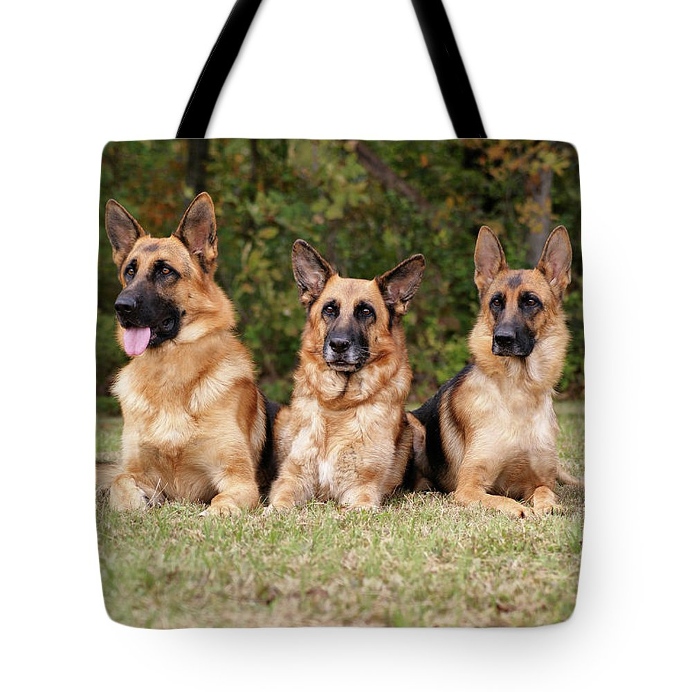 Dogs Tote Bag featuring the photograph German Shepherds - Family Portrait by Sandy Keeton