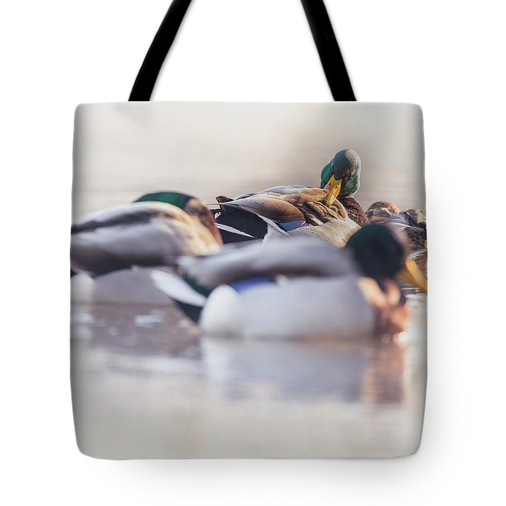 Day Tote Bag featuring the photograph Getting Ready For The Day by Annette Bush