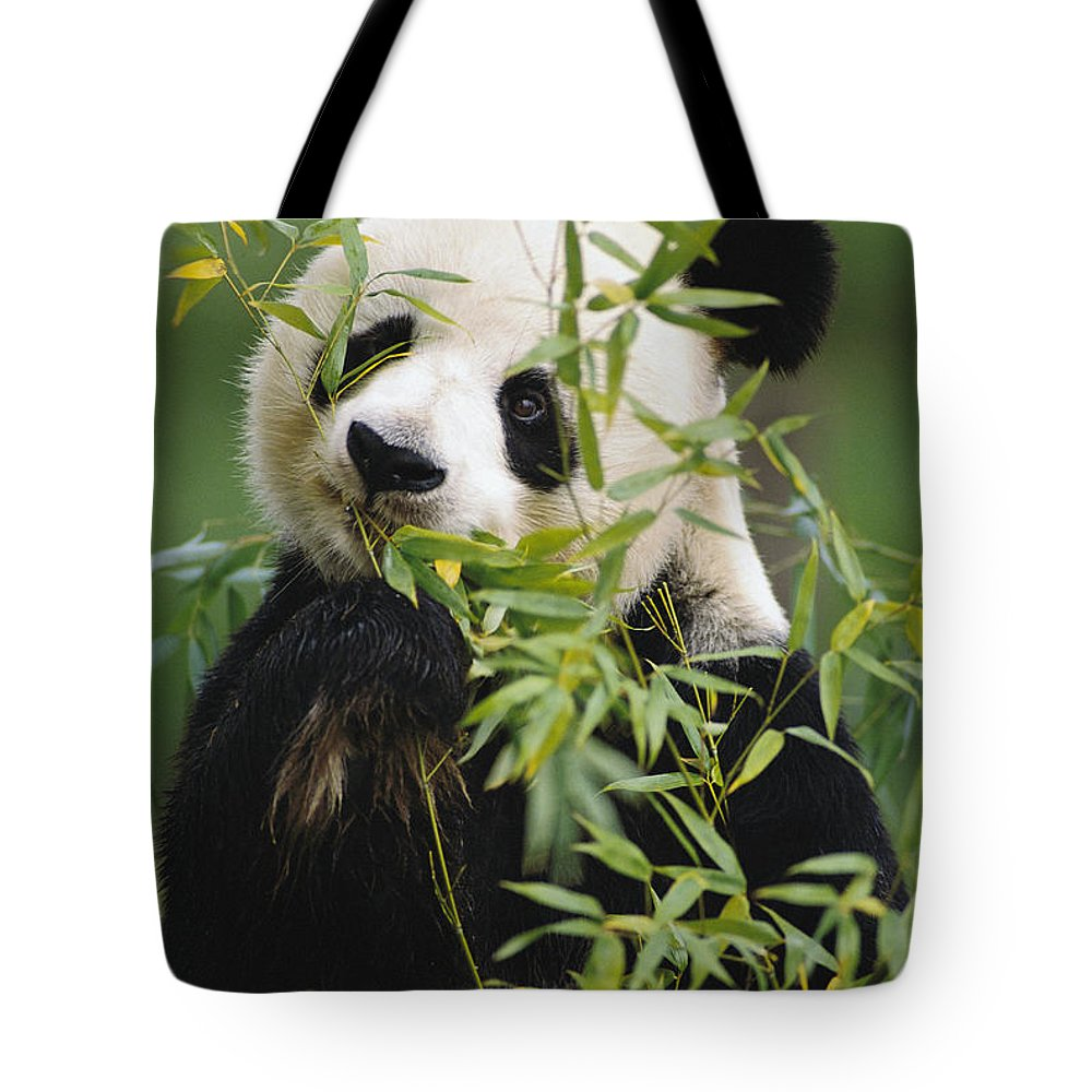 Mp Tote Bag featuring the photograph Giant Panda Eating Bamboo by Gerry Ellis