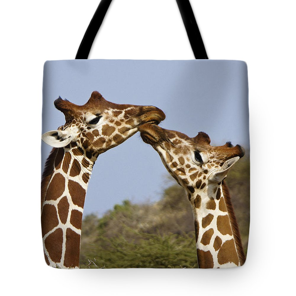 Africa Tote Bag featuring the photograph Giraffe Kisses by Michele Burgess