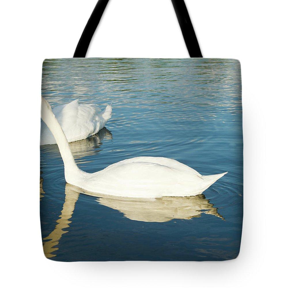 Cygnus Tote Bag featuring the photograph Give Me A Little Kiss Hun by Douglas Barnett