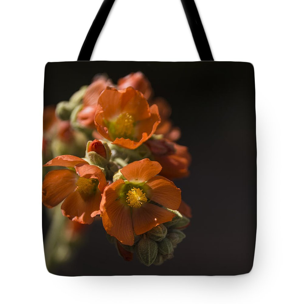 Globe Mallow Tote Bag featuring the photograph Globe Mallow by Laura Pratt