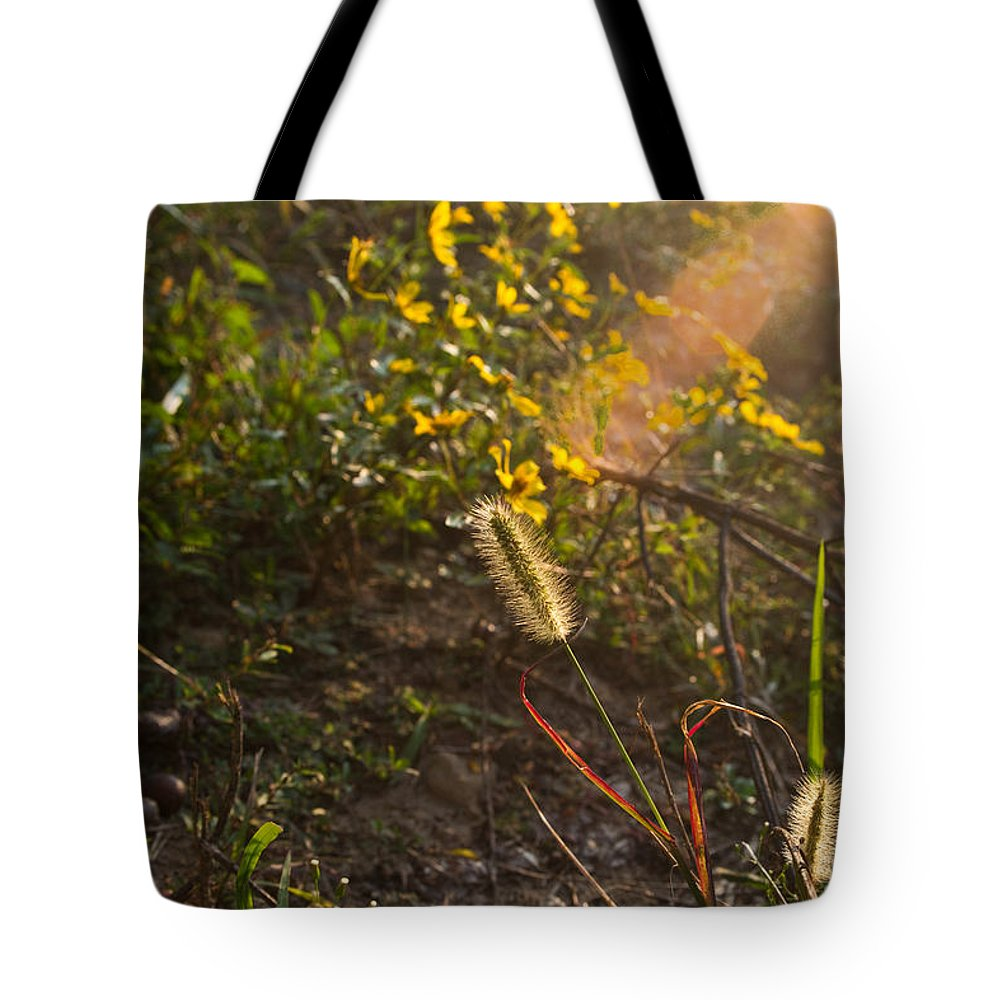 Kentucky Tote Bag featuring the photograph Glorious Foxtail by Douglas Barnett