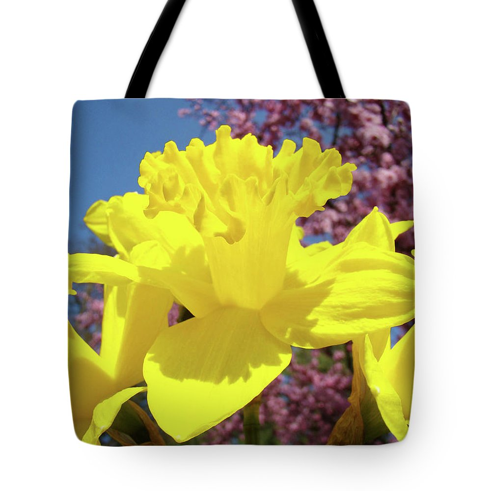 Daffodils Tote Bag featuring the photograph Glowing Yellow Daffodils Art Prints Pink Blossoms Spring Baslee Troutman by Baslee Troutman