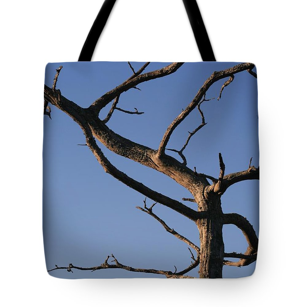 Tree Tote Bag featuring the photograph Gnarly Tree by Nadine Rippelmeyer