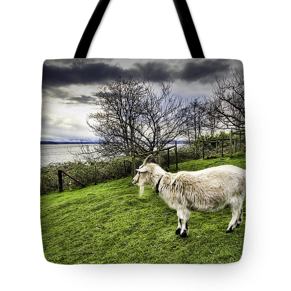 Animals Tote Bag featuring the photograph Goat Enjoying The View by Josh Manwaring