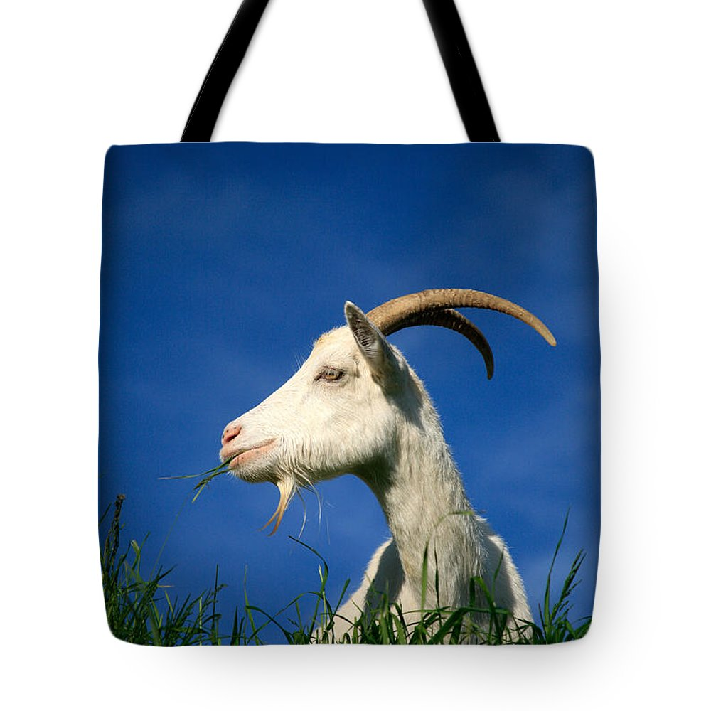 Animals Tote Bag featuring the photograph Goat by Gaspar Avila