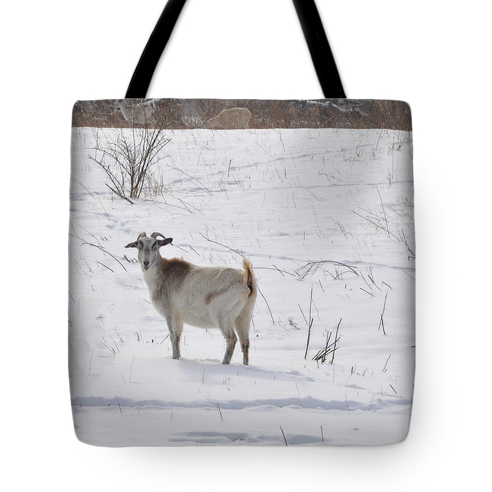 Goats Tote Bag featuring the photograph Goats In Snow by Brittany Horton