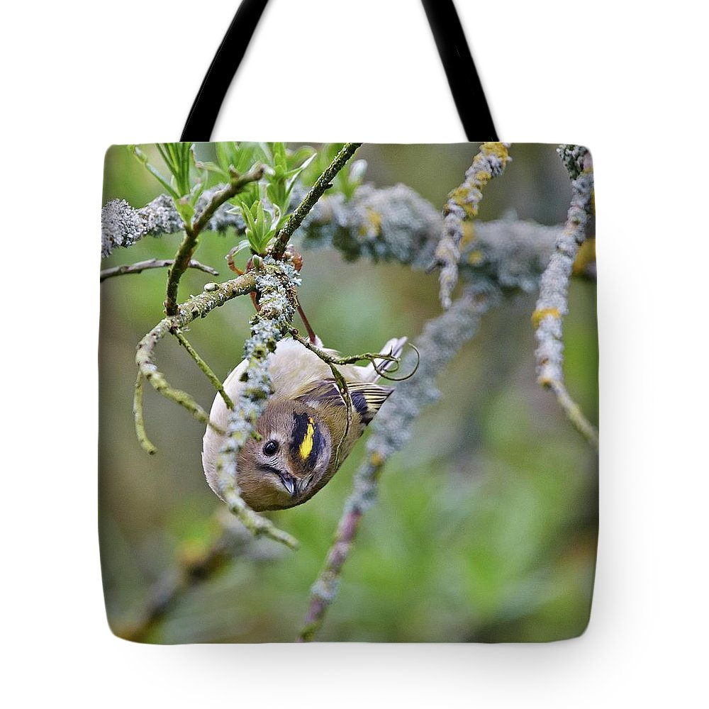 Tiny Tote Bag featuring the photograph Goldcrest by Paul Hayes