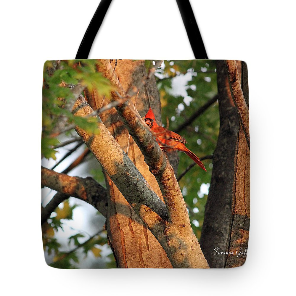 Cardinal Tote Bag featuring the photograph Golden Afternoon Glow II by Suzanne Gaff