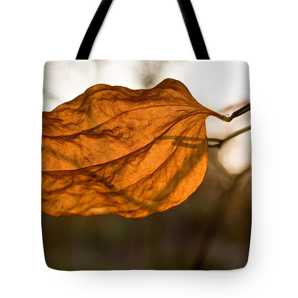 Golden Tote Bag featuring the photograph Golden Briar Leaf by Douglas Barnett