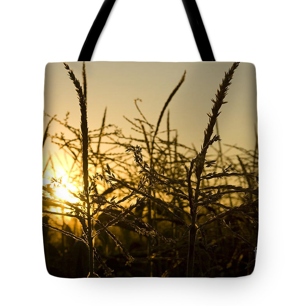 Golden Tote Bag featuring the photograph Golden Corn by Idaho Scenic Images Linda Lantzy