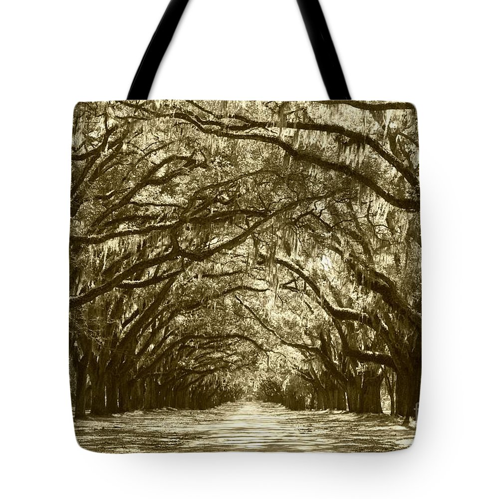 Live Oaks Tote Bag featuring the photograph Golden Dream World by Carol Groenen