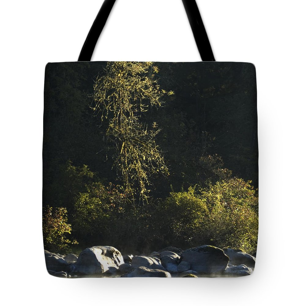 Tree Tote Bag featuring the photograph Golden Glow by Sara Stevenson
