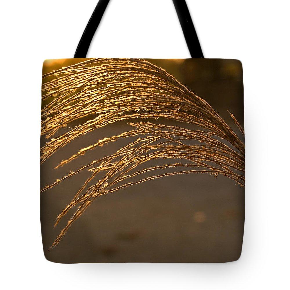 Grass Tote Bag featuring the photograph Golden Grass by Douglas Barnett