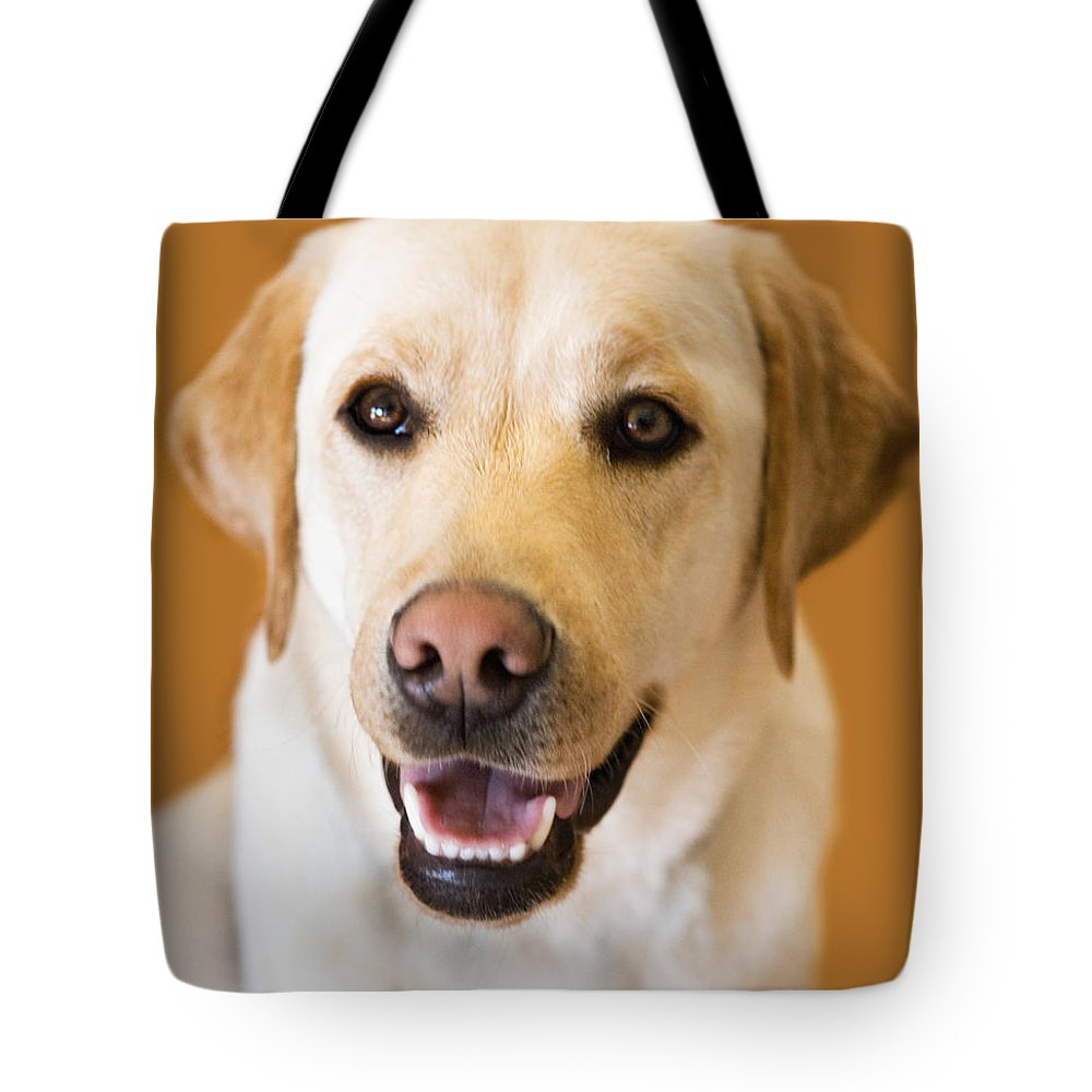 Lab Tote Bag featuring the photograph Golden Lab by Marilyn Hunt