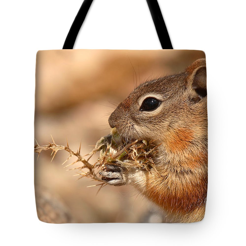 Squirrel Tote Bag featuring the photograph Golden-mantled Ground Squirrel Eating Prickly Spine by Max Allen
