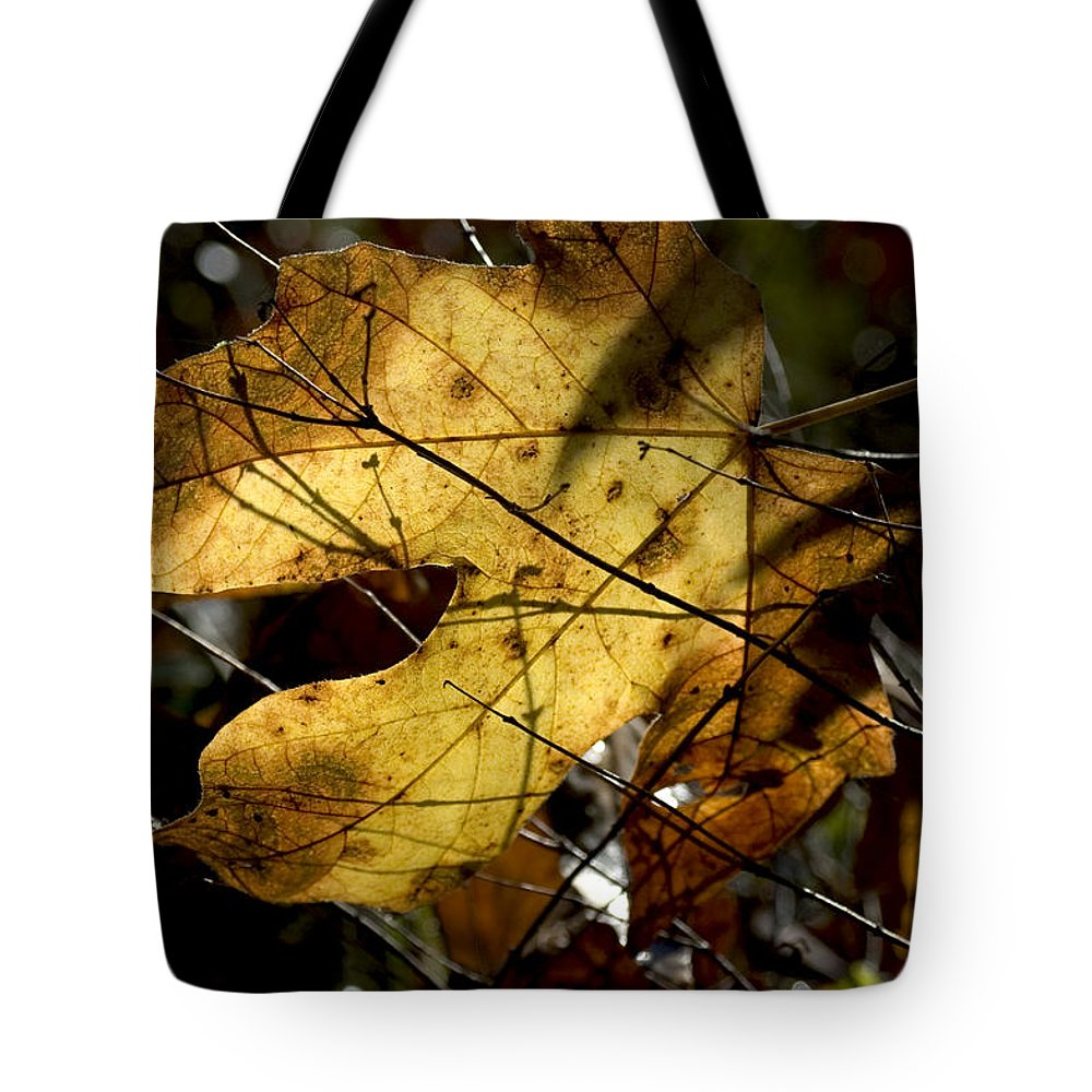 Leaf Tote Bag featuring the photograph Golden by Sara Stevenson