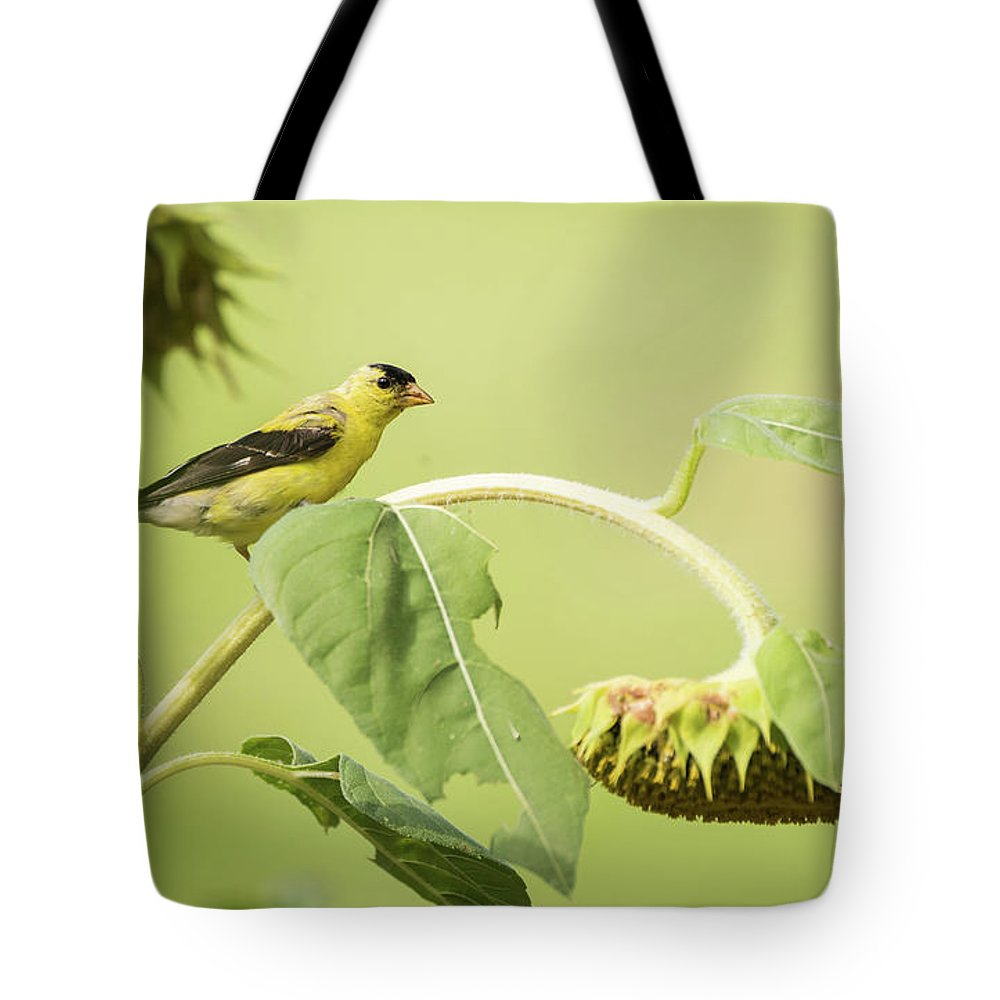 Aves Tote Bag featuring the photograph Golden Sunflower by Heather Hubbard