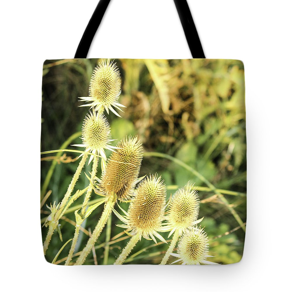 Thistles Tote Bag featuring the photograph Golden Thistles Sextet by Lorraine Baum