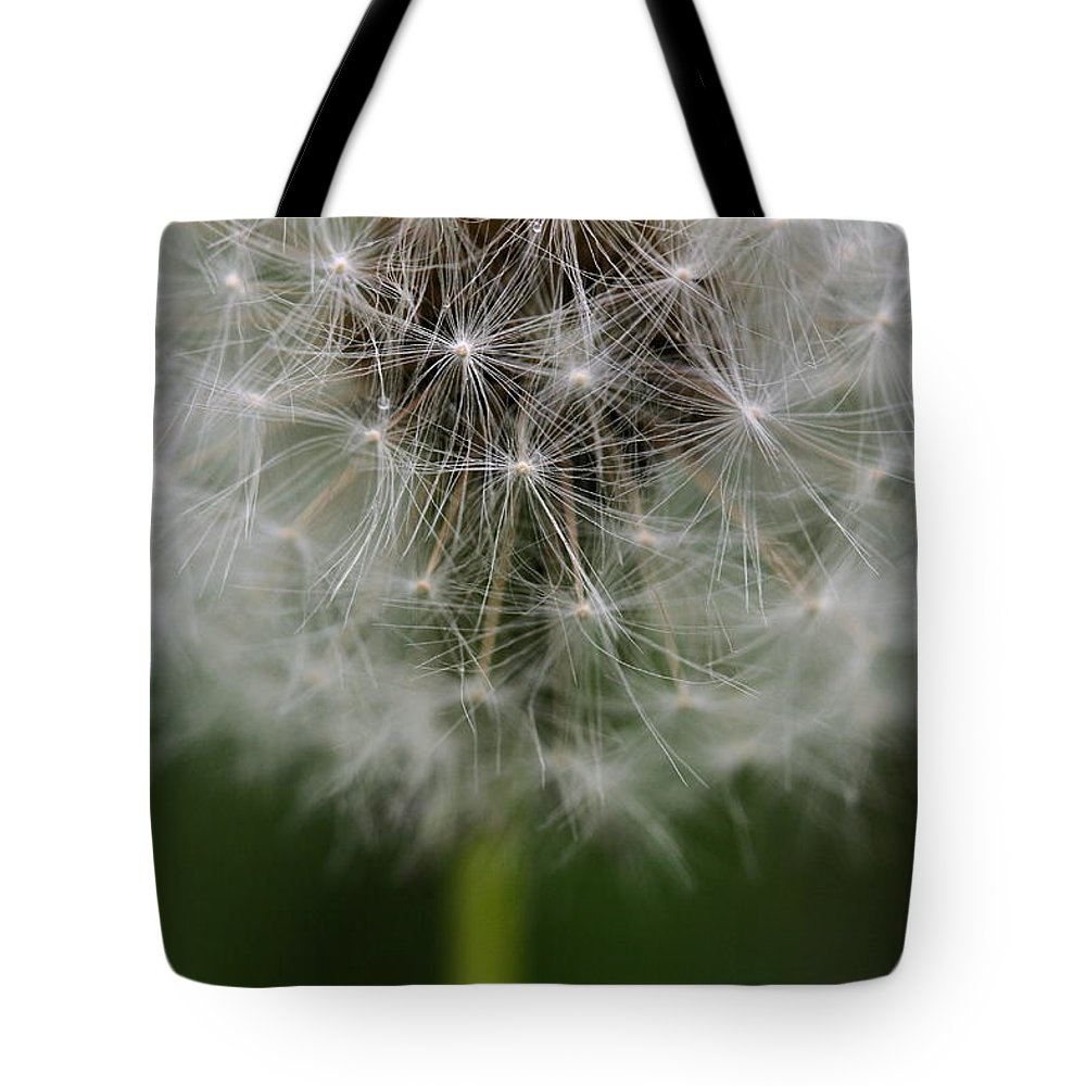 Dandelion Tote Bag featuring the photograph Gone To Seed - Color by Angela Rath