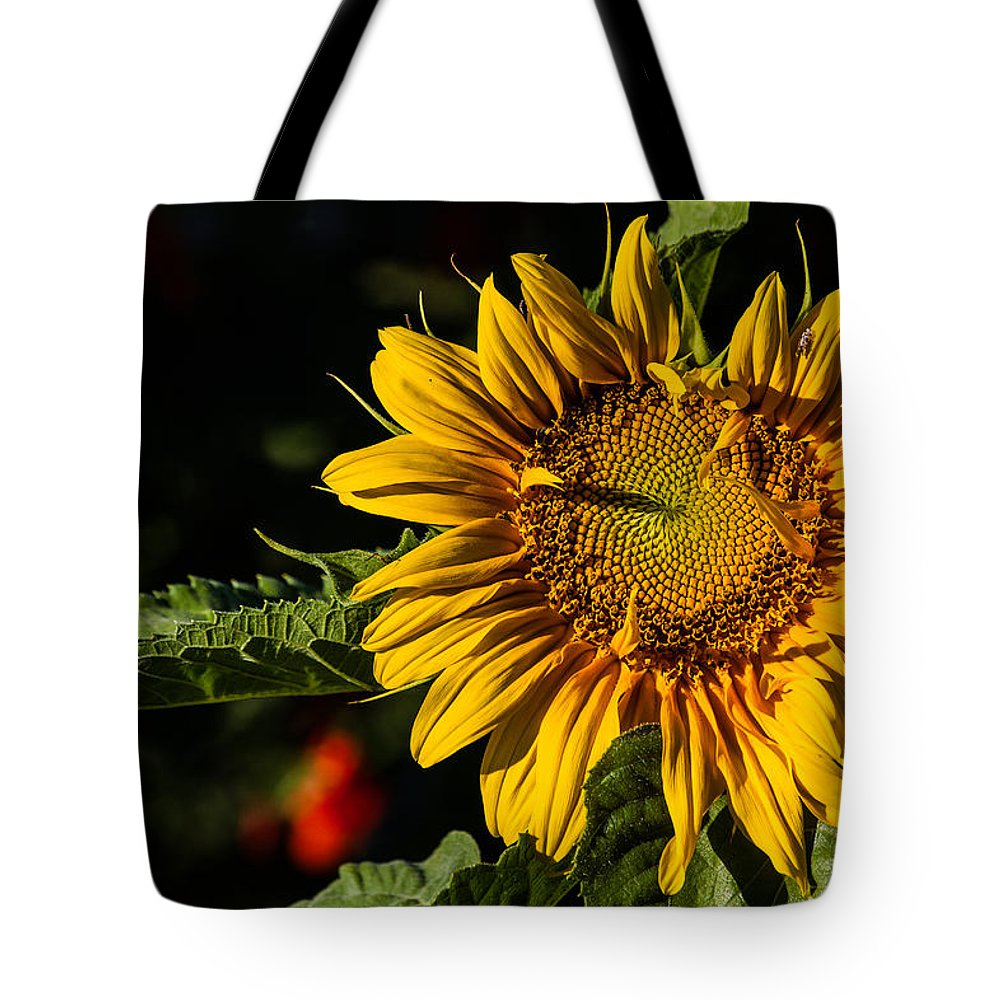 Sunflower Tote Bag featuring the photograph Good Morning by Alana Thrower