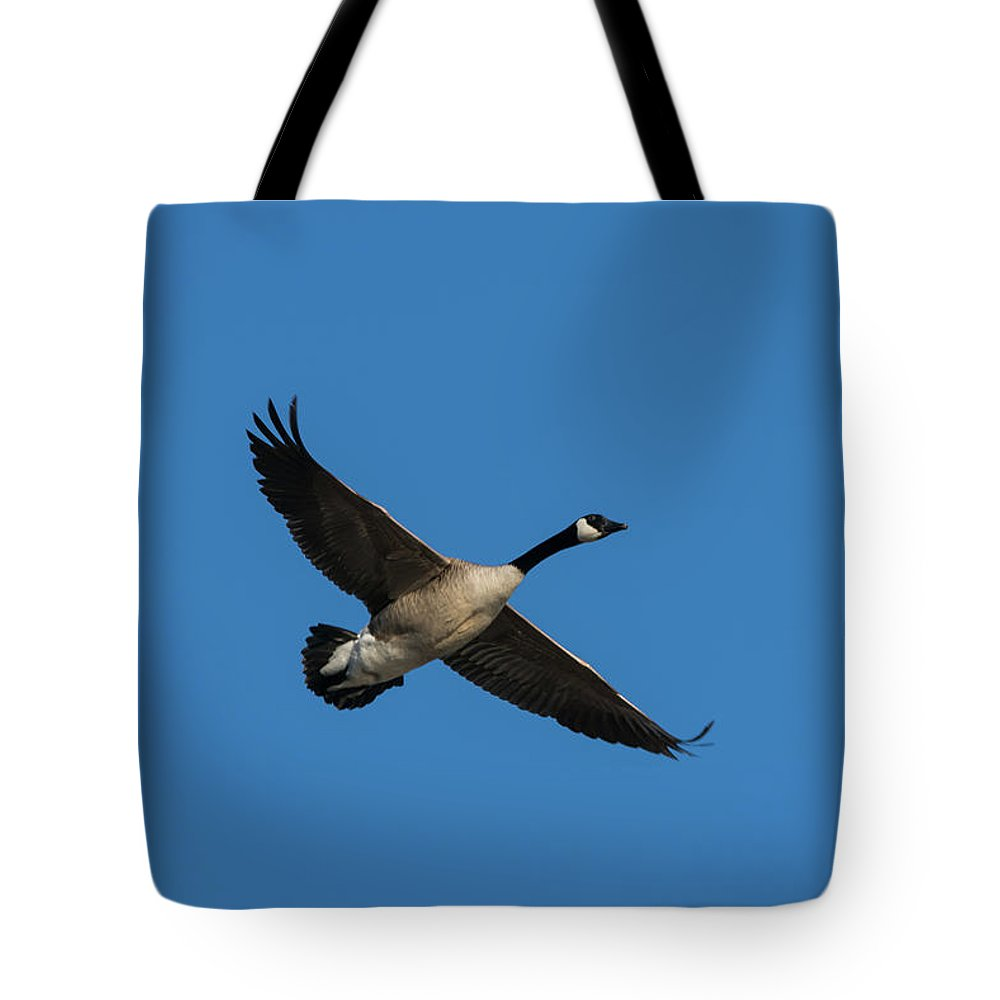 Goose Tote Bag featuring the photograph Goose In Flight by Jessica Michaels
