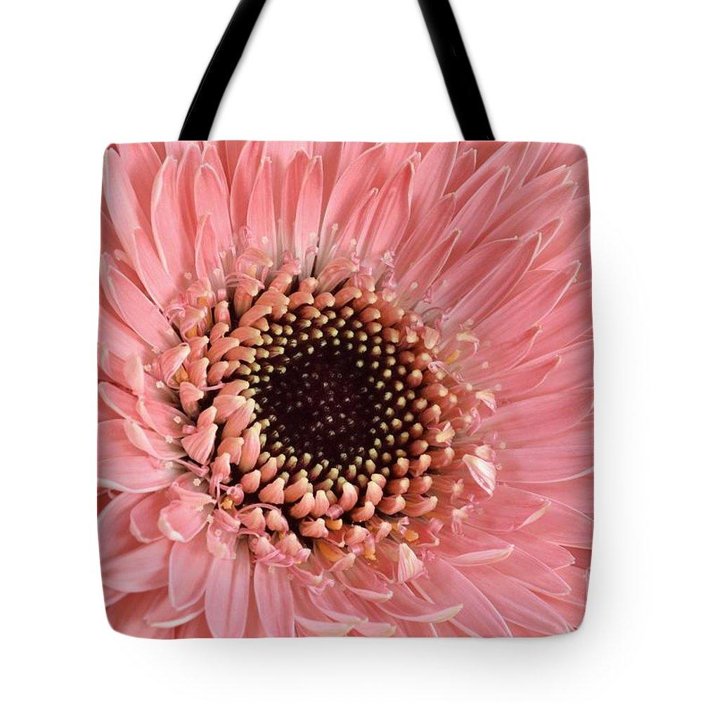 Gerbera Tote Bag featuring the photograph Gorgeous Gerbera by Brenda Lawlor