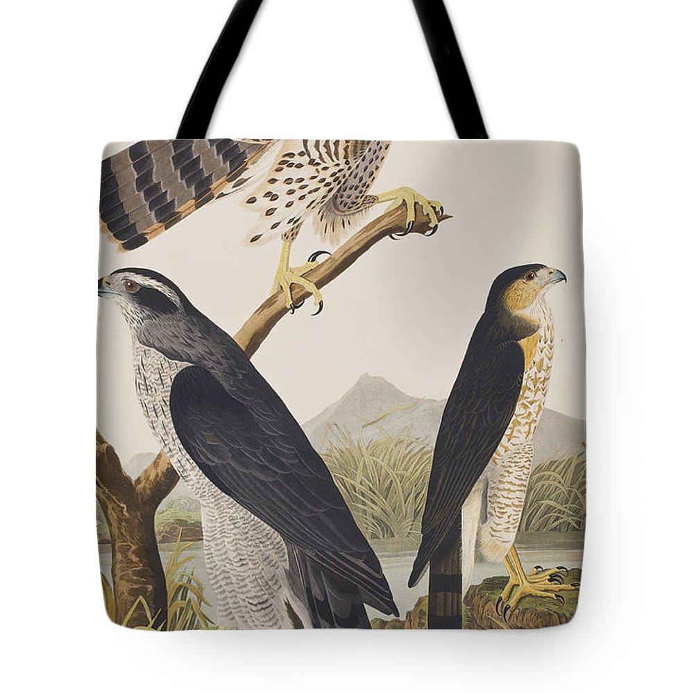 Goshawk Tote Bag featuring the painting Goshawk And Stanley Hawk by John James Audubon